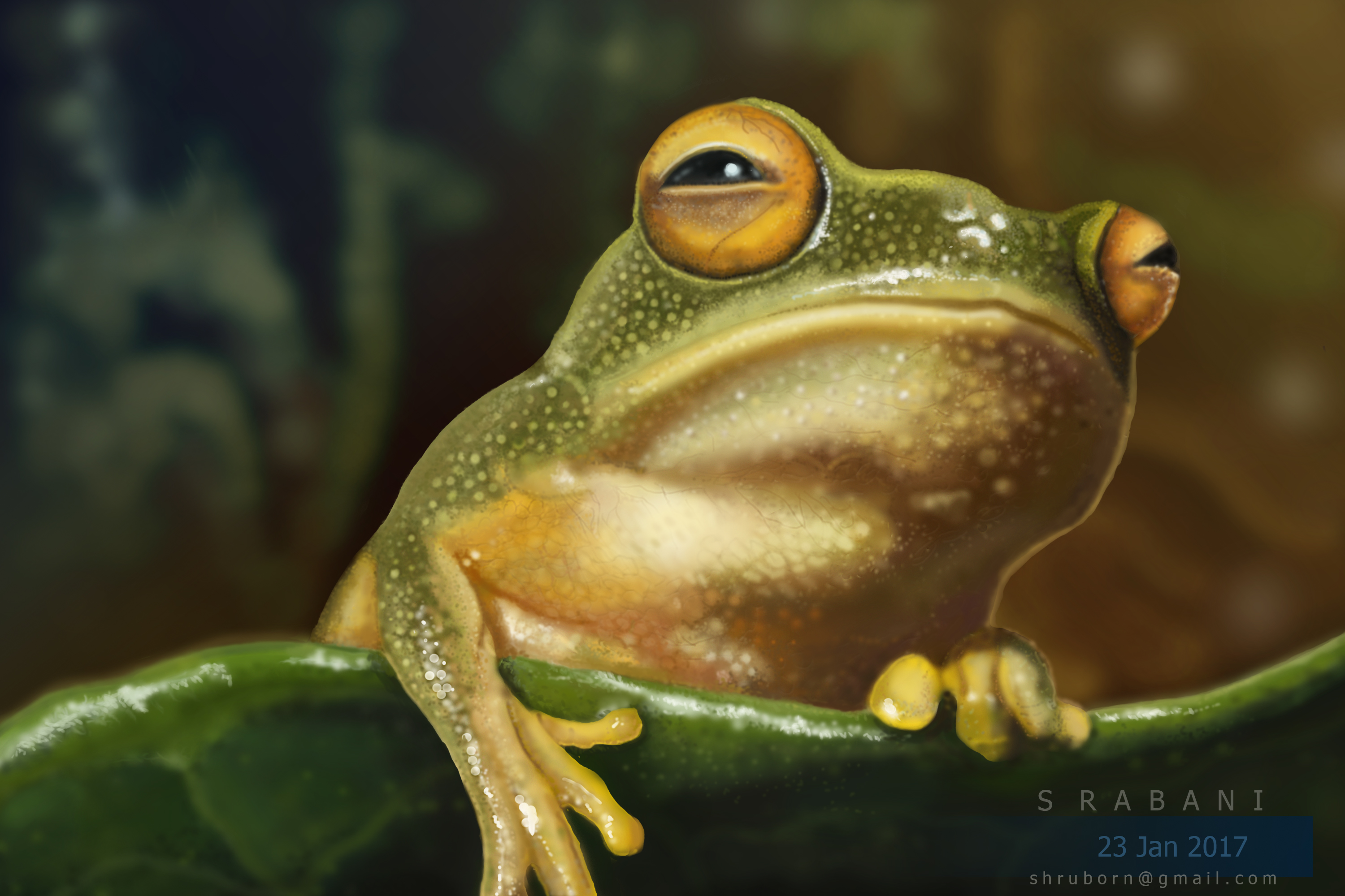 frog_20-Recovered